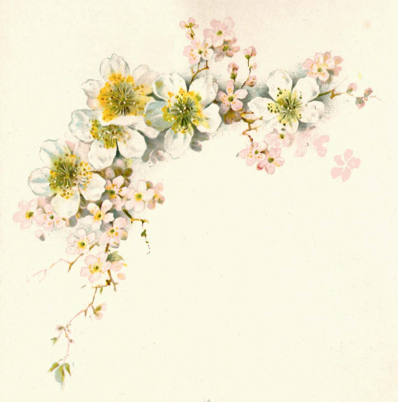 16 Antique Flower Graphic Images