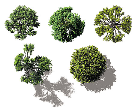 Architectural Trees Birds Eye View