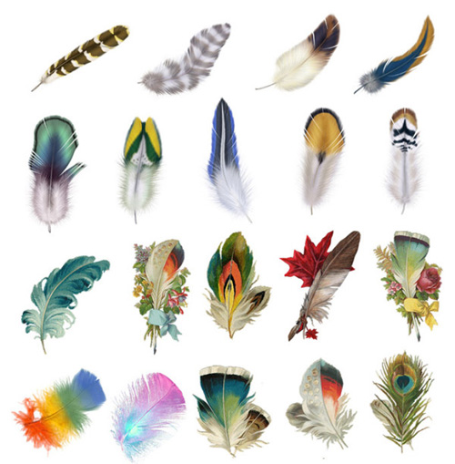 Bird Feather Clip Art