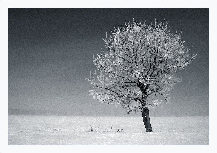 19 black and white photography snow on trees images snow