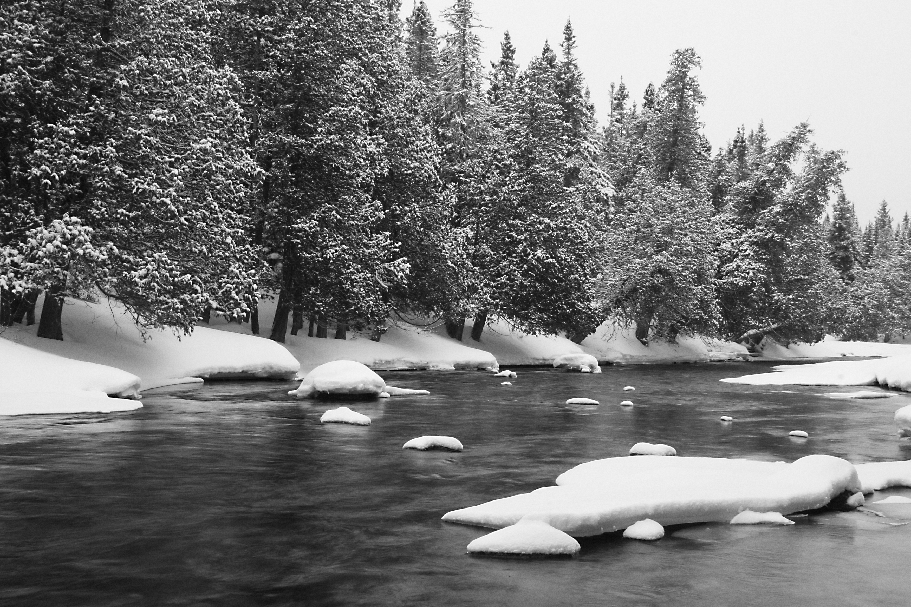 19 black and white photography snow on trees images snow trees