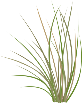 12 Wheatgrass Vector Free Images