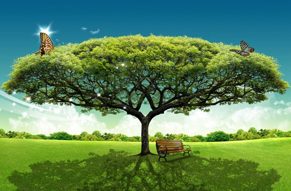 8 Real Tree Background Psd Images
