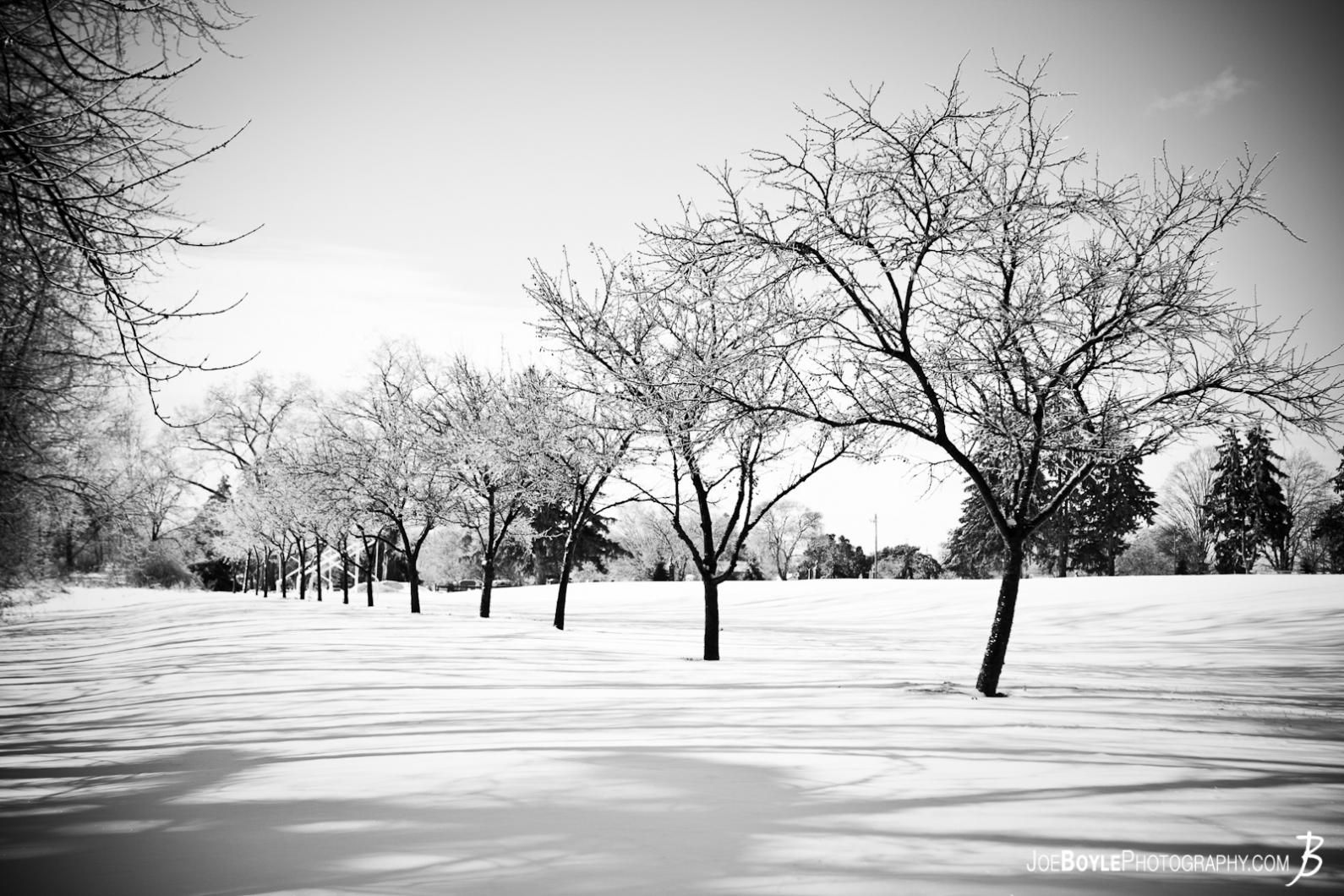 19 Black And White Photography Snow On Trees Images
