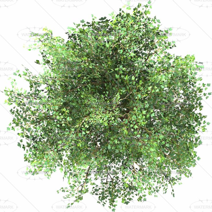 11 Plan View Tree Graphics Images Photoshop Trees Plan
