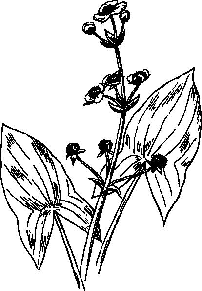Arrowhead Outline Clip Art