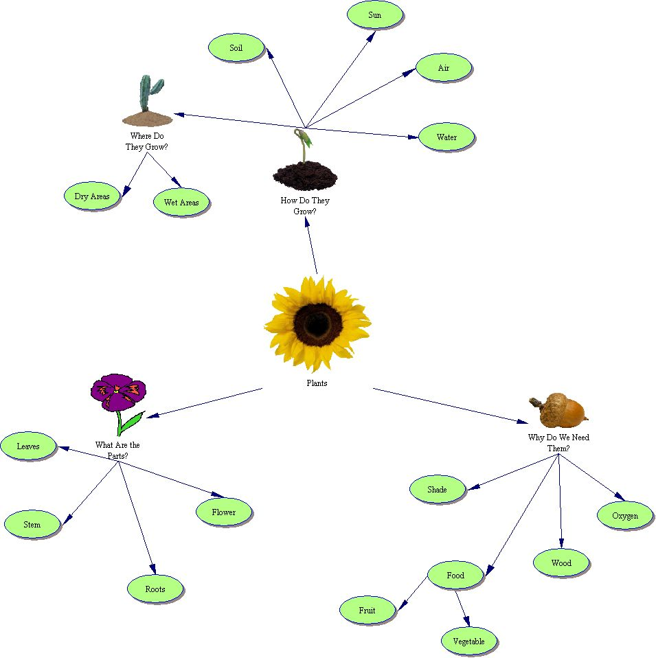 Plant Classification Graphic Organizer