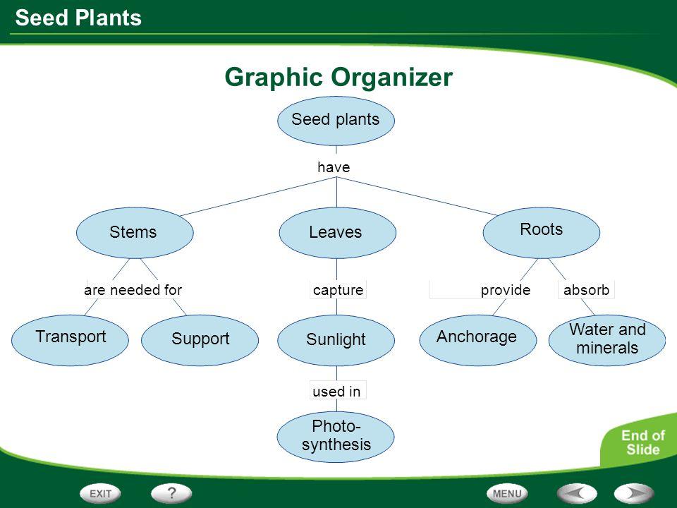 Plant Seed Graphic Organizer
