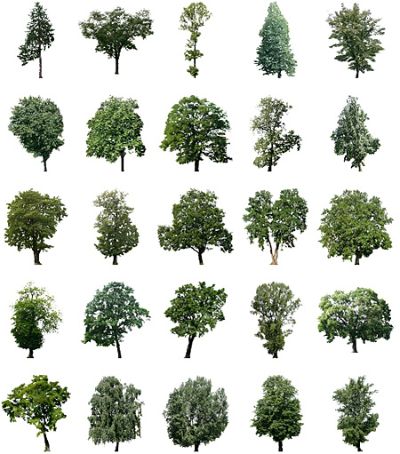 Cut Out Trees Photoshop