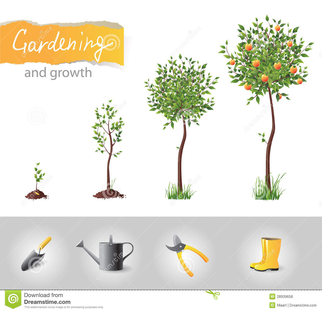 Growing Tree Free Stock Photos