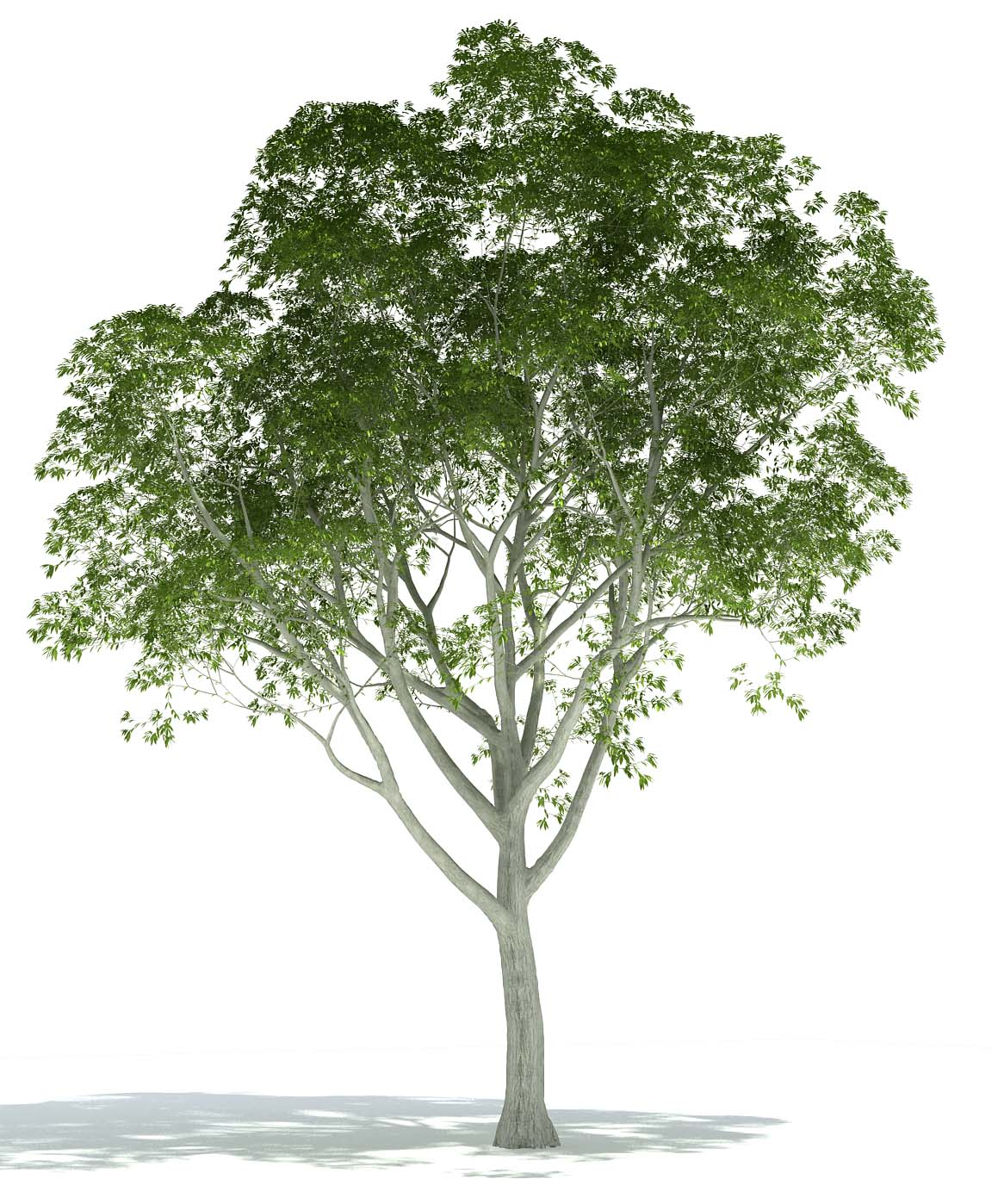 Photoshop Architectural Tree