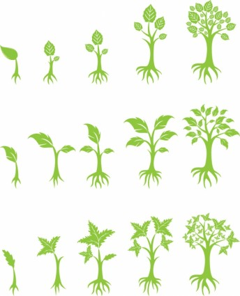 13 Growing Tree Graphic Images