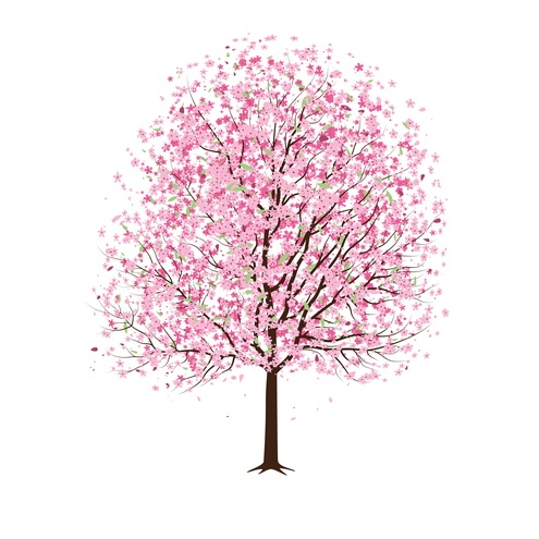 13 Cherry Blossom Tree Designs Images