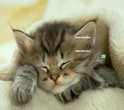 Windows 7 Desktop Themes Cats