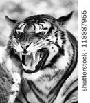 Clip Art Black and White Tiger Growling