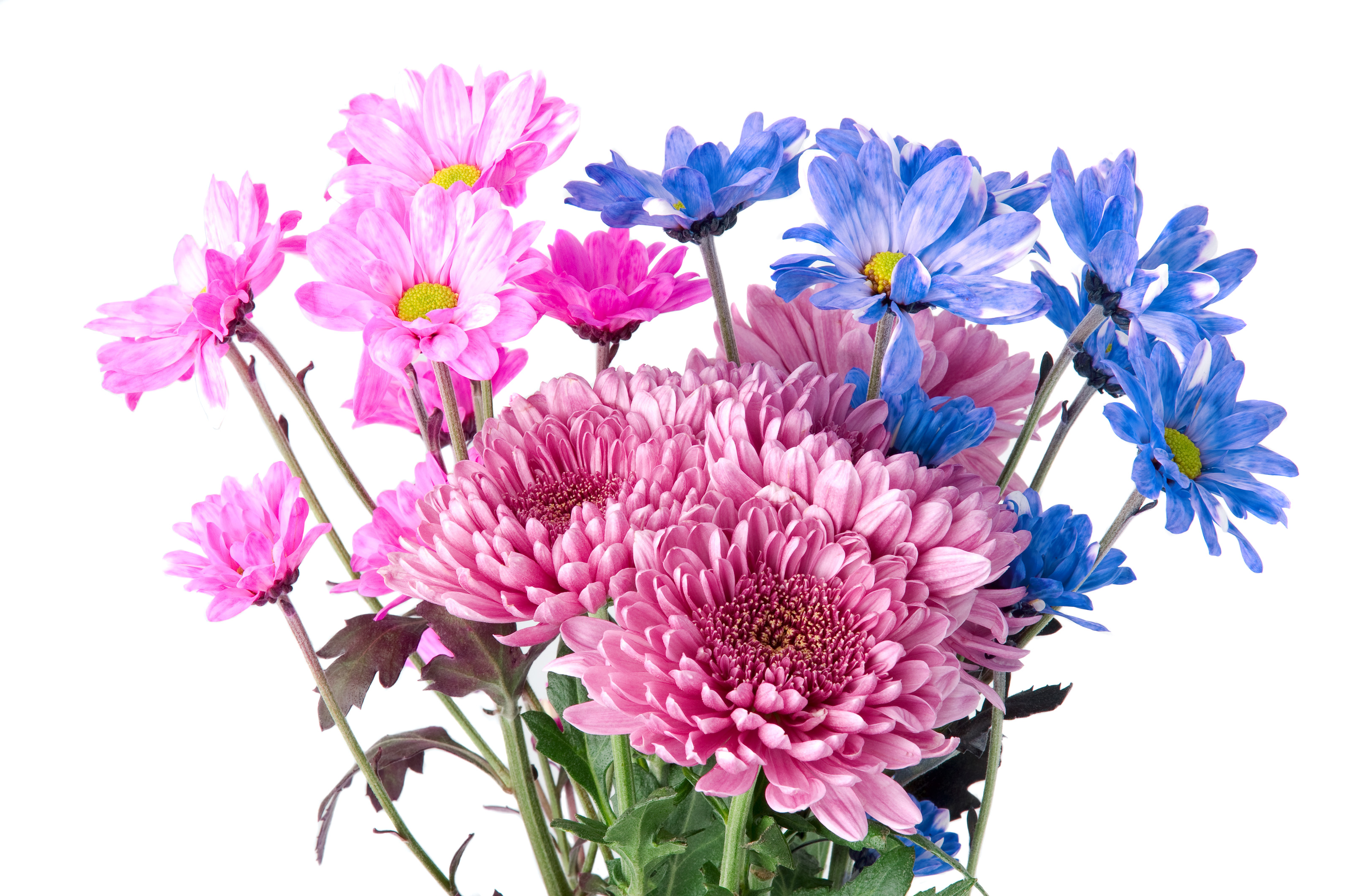 Flowers Stock Photo Flowers Healthy