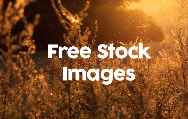 M free photographs for