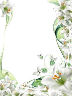 Images of White Lily Flower Transparent PNG Frames