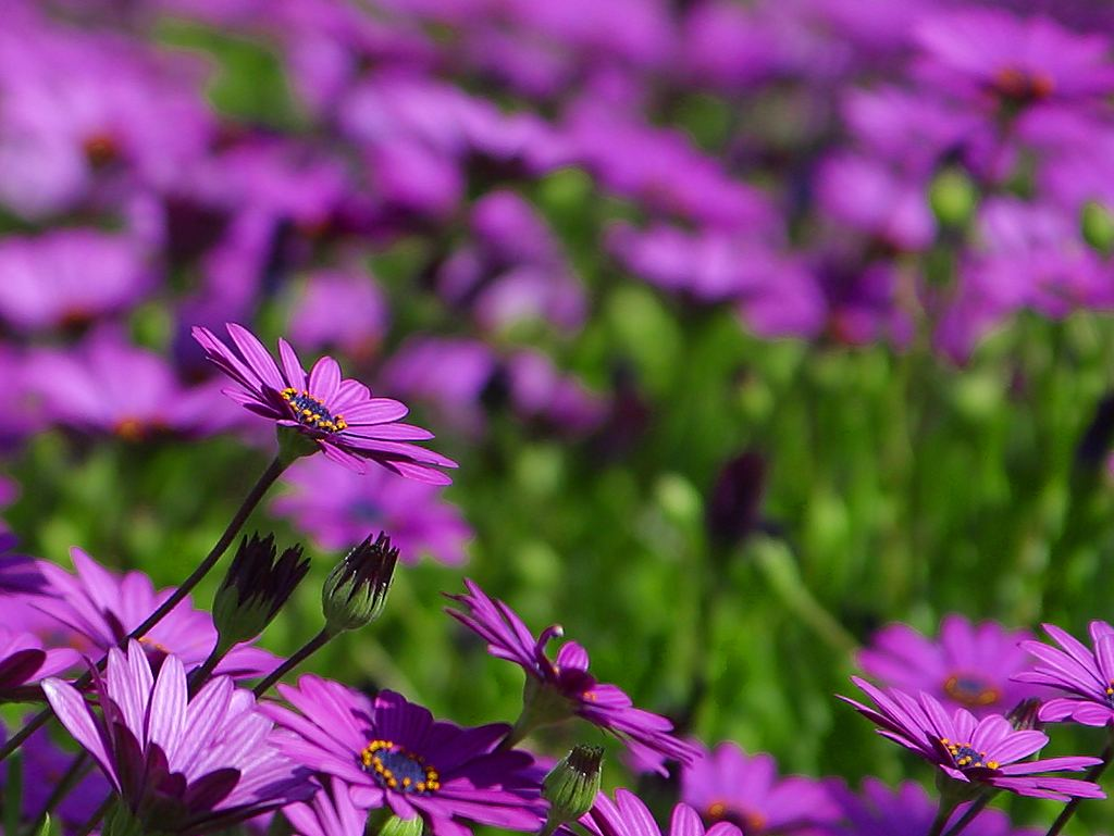 Public-Domain Purple Flower