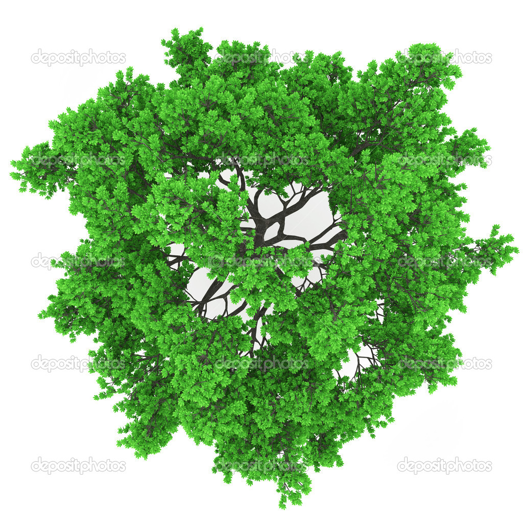 15 Tree Top View Vector Images