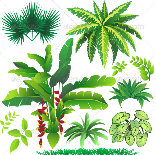 Cartoon Tropical Plants
