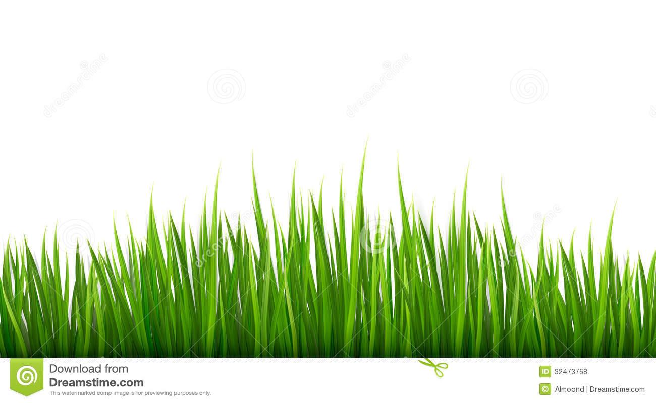 Light Green Plants Aesthetic