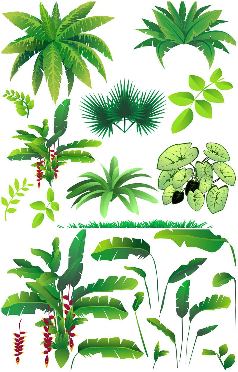 Jungle Plants Clip Art