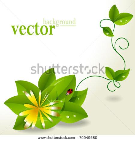 Plant Identification Cards