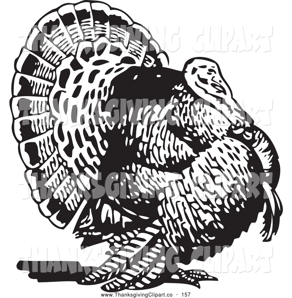 16 Turkey Vector Art Images