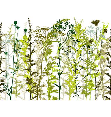 Weed Plant Vector Free