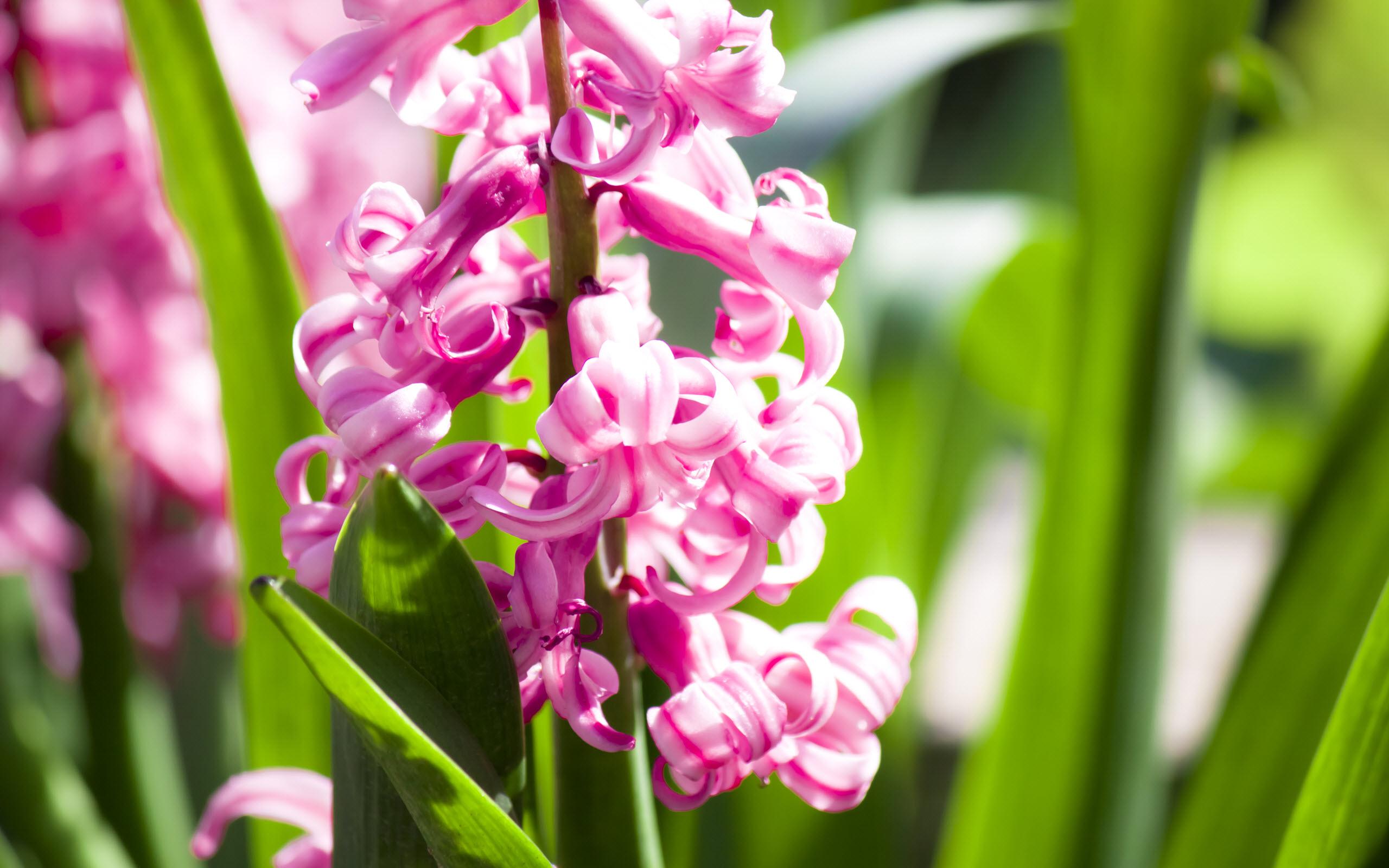 Amazing Pink Flowers