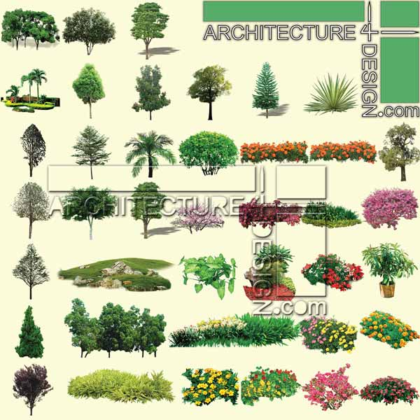 Architectural Tree Elevation