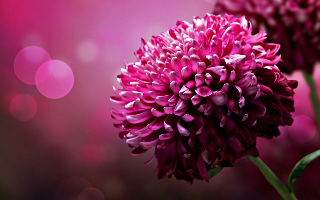 Beautiful Flower Pictures Free