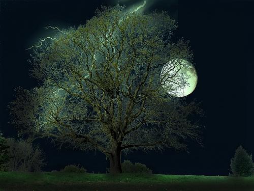 Free Photoshop Backgrounds Trees
