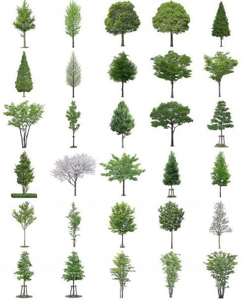 Free Photoshop Trees