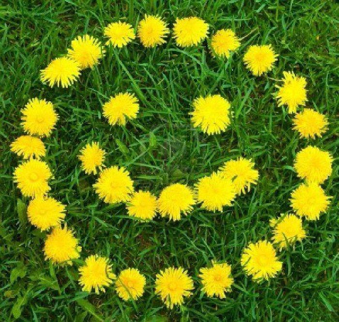 Happy Weekend Spring Flowers