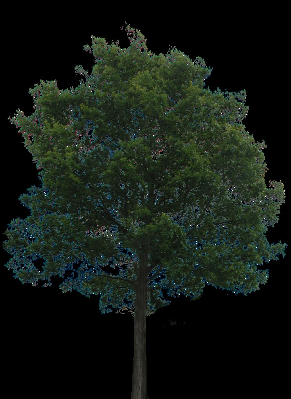 Photoshop Transparent Trees