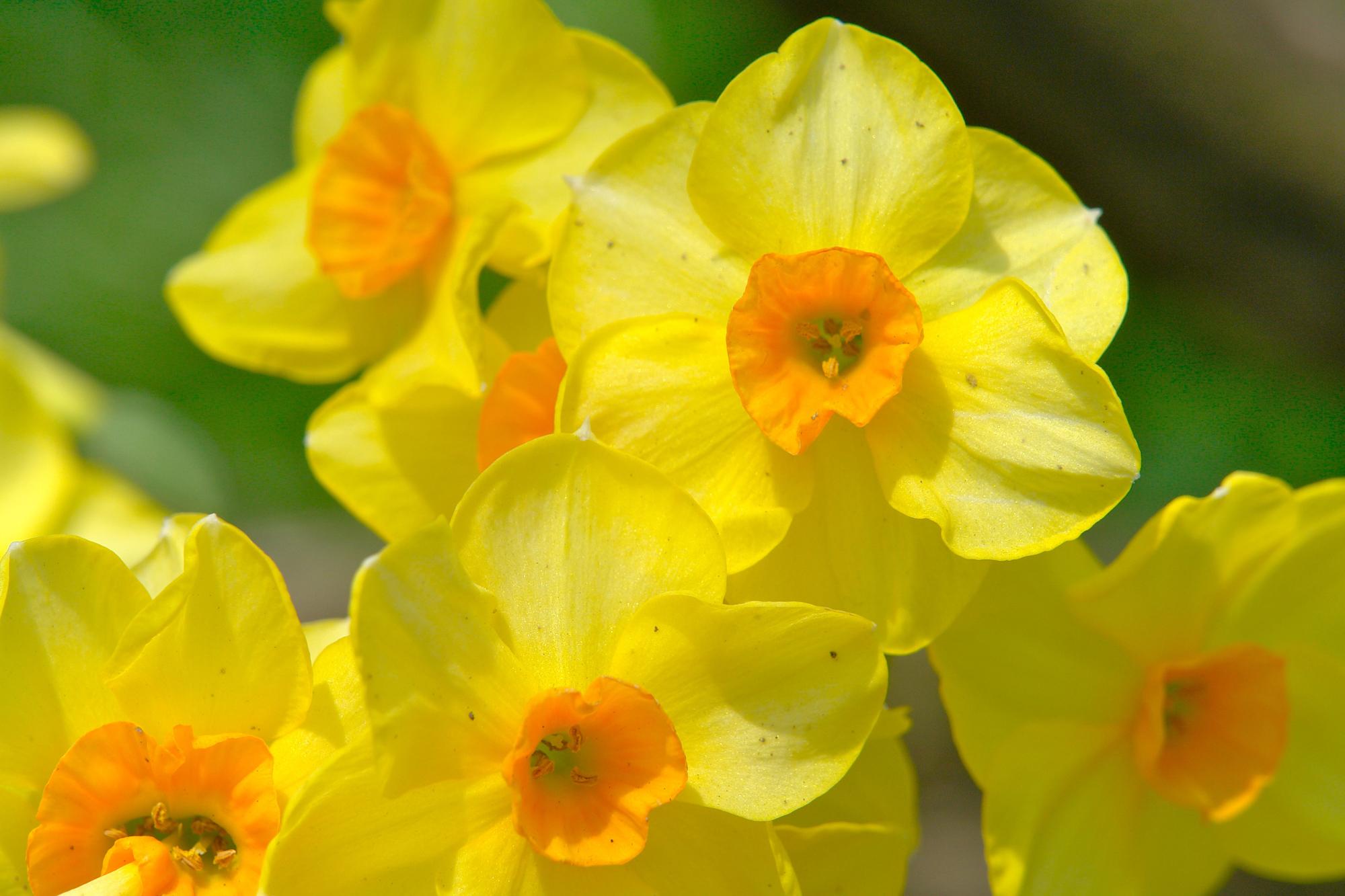 Picture Springtime Spring Flowers