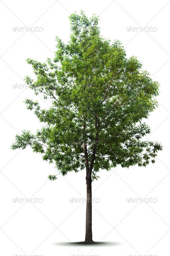Pine Tree Photoshop Top View