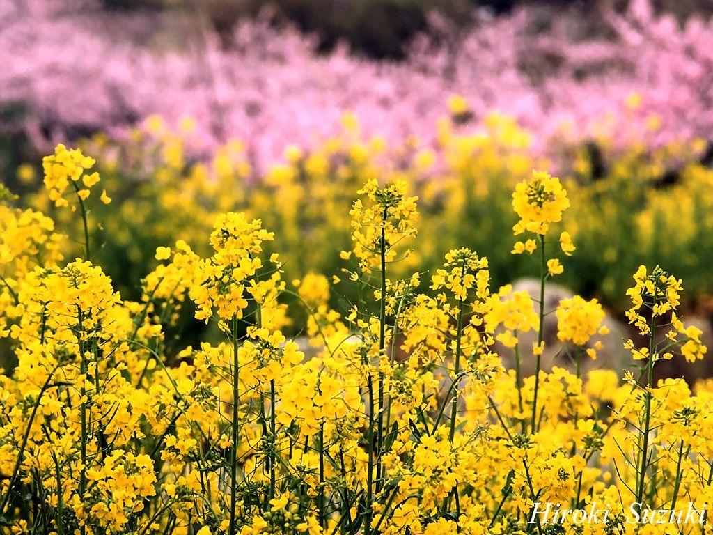 Spring Flowers.com