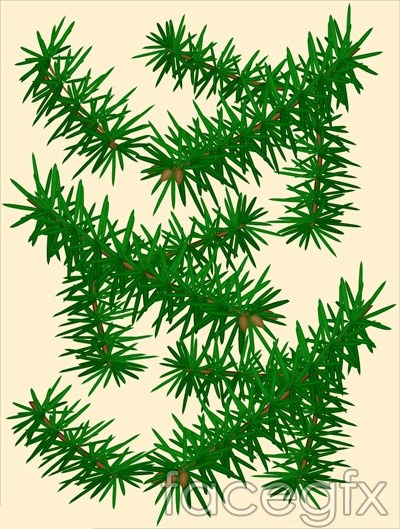 15 Pine Leaf Vector Images