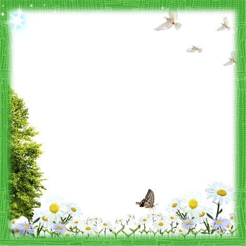 Butterfly Photoshop Frame PNG