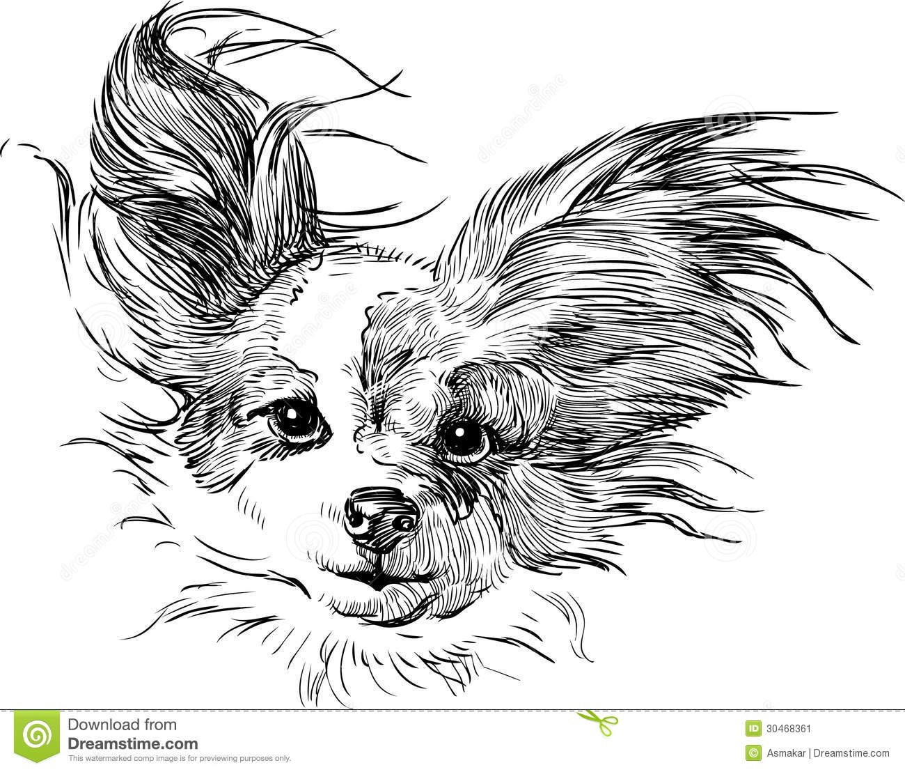 8 Vector Head Chihuahua Images