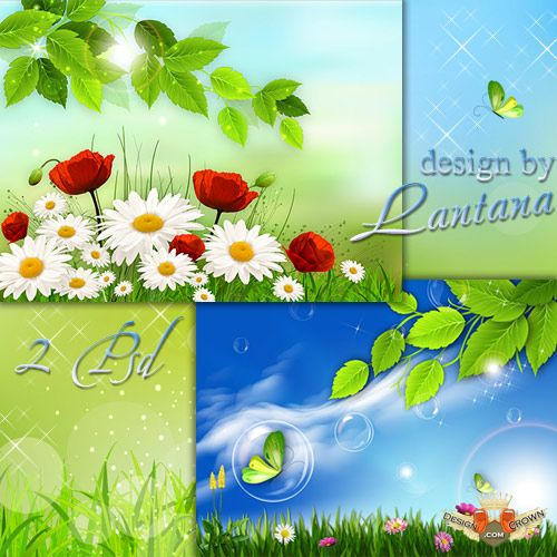 Daisies and Butterflies Spring