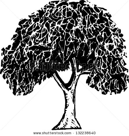 8 Elm Tree Vector Images