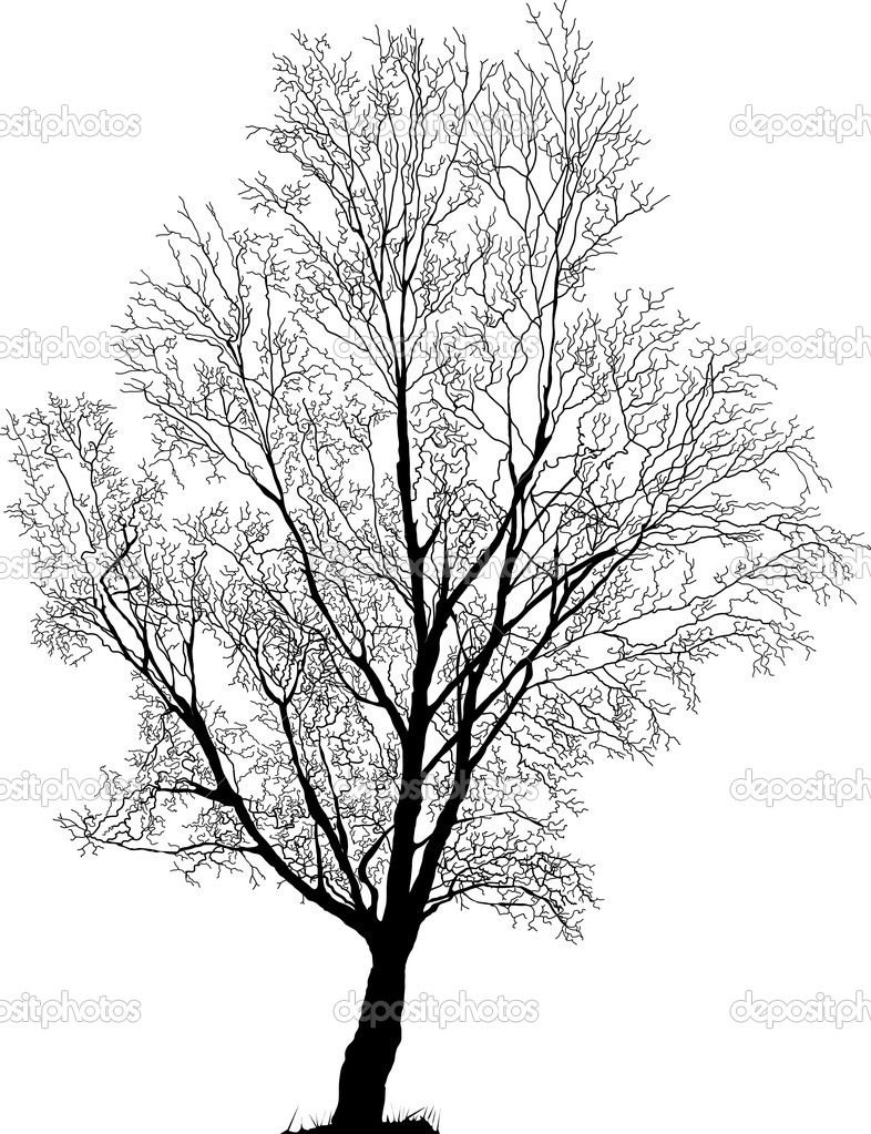 Elm Tree Vector Illustration