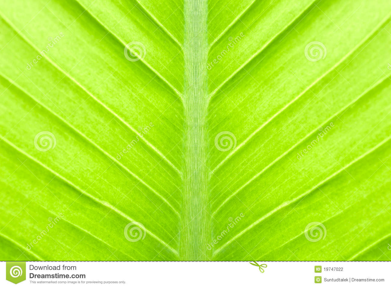 7 Abstract Green Leaf Icon Images