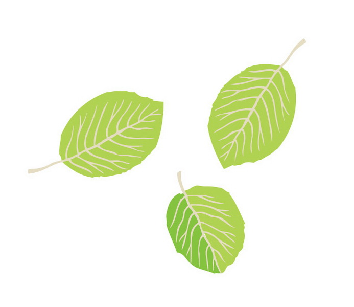 Leaves Vector Simple