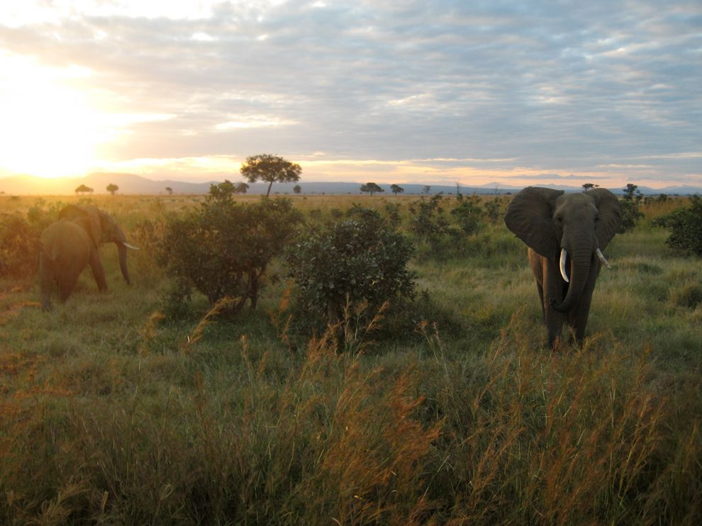 National Geographic Tanzania