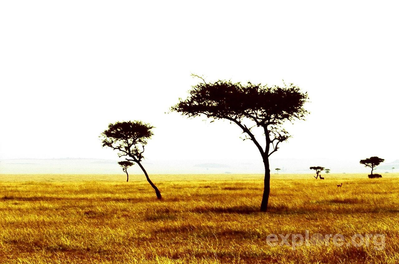 National Park Serengeti Tanzania Safari